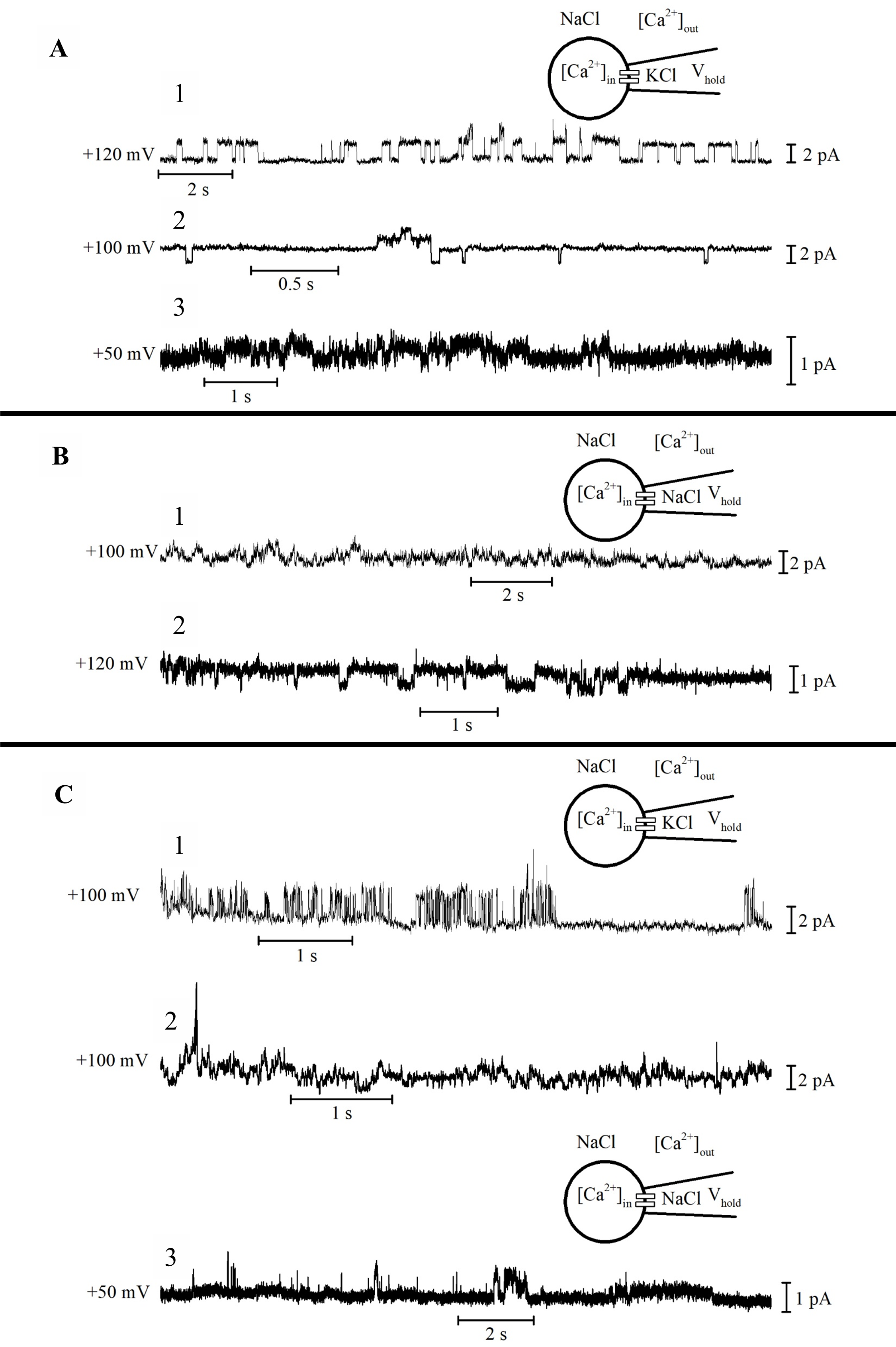 Single channel events recorded from platelets in cell-attached mode. A, B