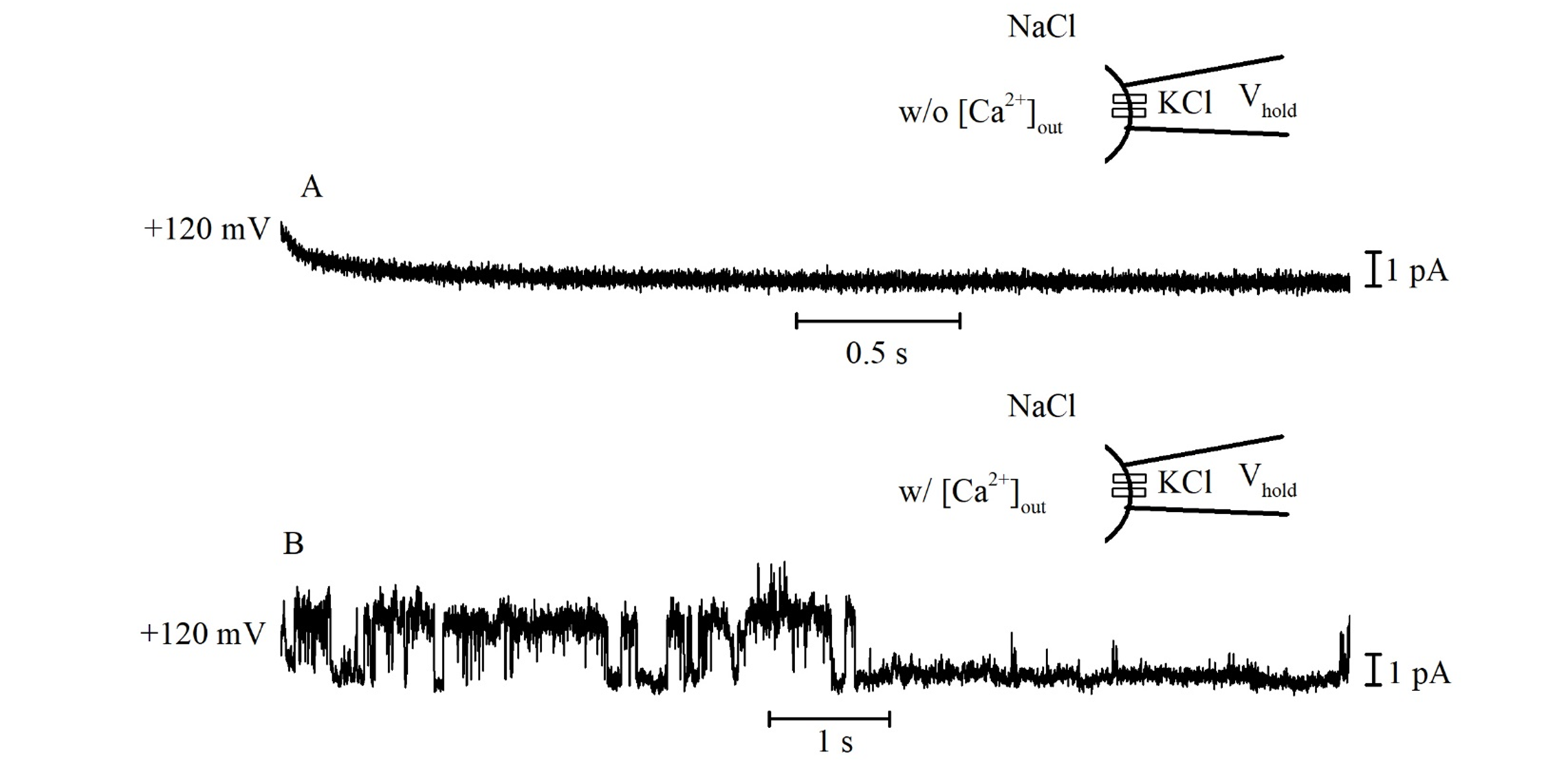 Single channel ionic currents recorded from platelets in inside-out configuration